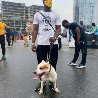 #ENDSARS protesters resume at Lekki Tollgate venue with defence dogs | Daily's Flash IMG 20201017 WA0037 200x200  #ENDSARS protesters resume at Lekki Tollgate venue with defence dogs | Daily's Flash IMG 20201017 WA0037 200x200