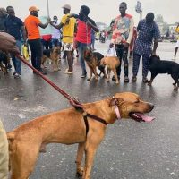 #ENDSARS protesters resume at Lekki Tollgate venue with defence dogs | Daily's Flash IMG 20201017 WA0039 200x200  #ENDSARS protesters resume at Lekki Tollgate venue with defence dogs | Daily's Flash IMG 20201017 WA0039 200x200